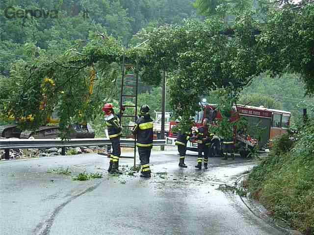 albero caduto intervento vigili fuoco