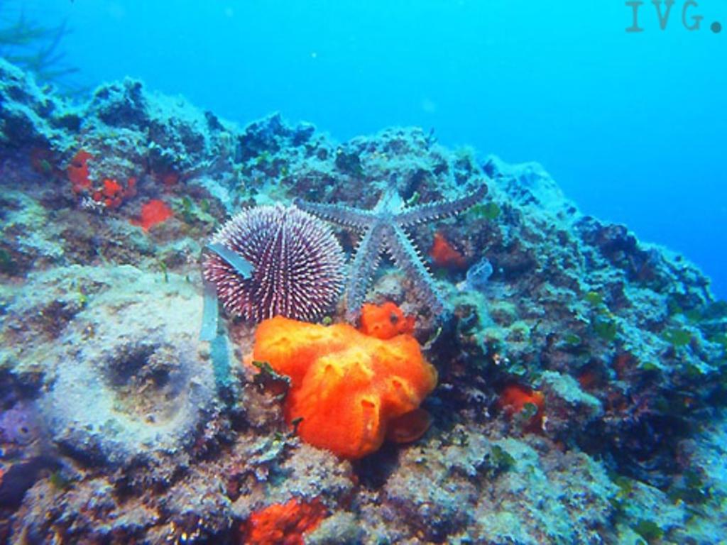 fondale marino stella marina riccio