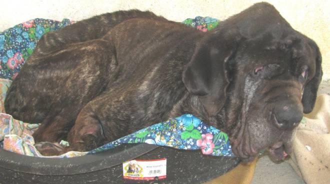 Raul, cane morto di fame a Stella