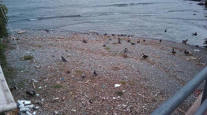 spiaggia rapallo