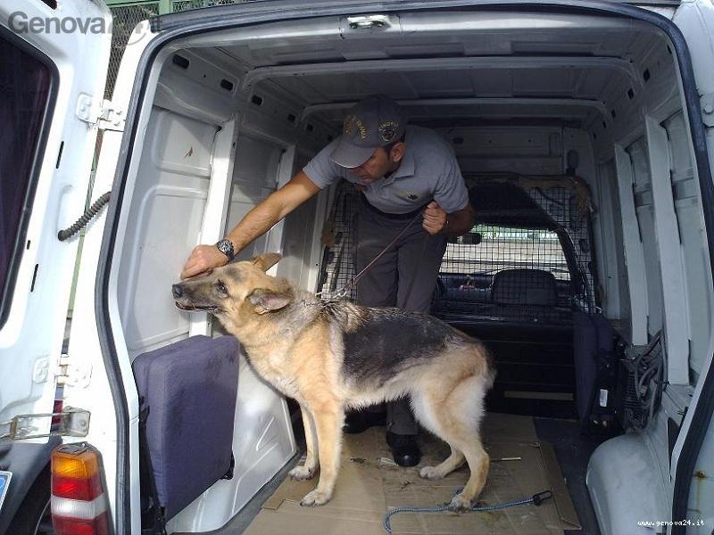 controlli cani