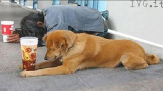 mendicante cane