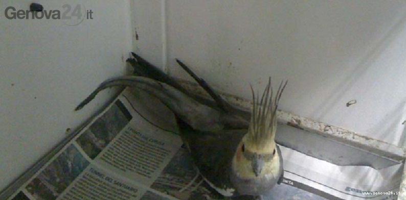 pappagallo enpa