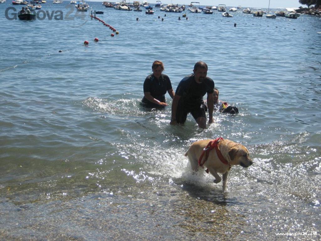 salvataggio con cane