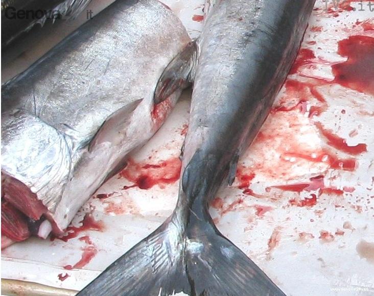 tonno rosso pesce