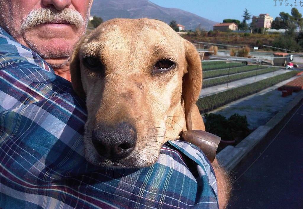 Dea, cane salvato a Campochiesa