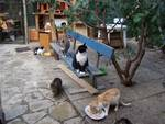 gattile albissola