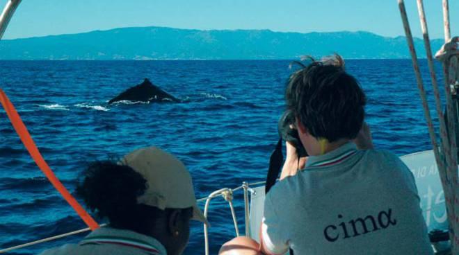 cima nautico balene