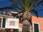 lavori potatura palme