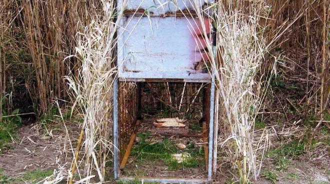 gabbia trappola per cinghiali