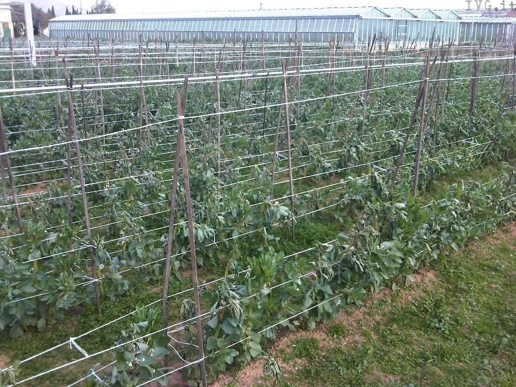 agricoltura, danni maltempo