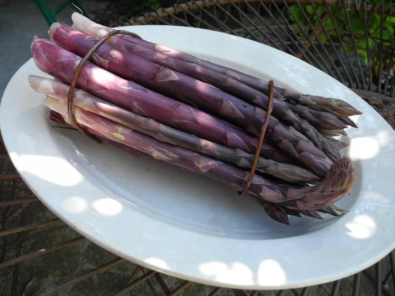 asparago violetto albenga