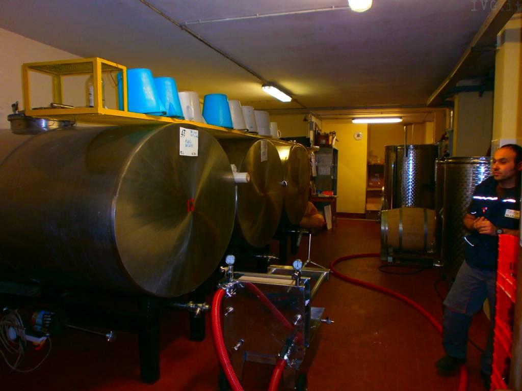vino, viticoltori ingauni