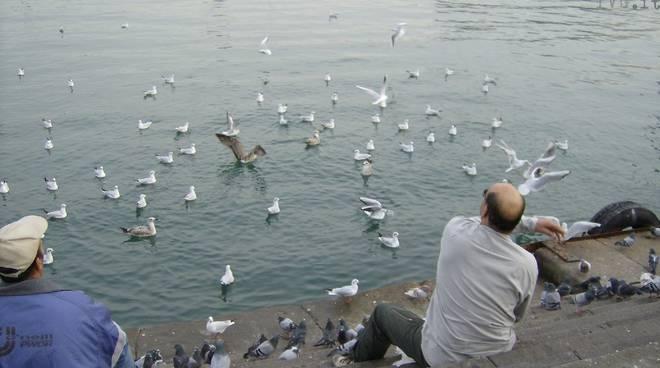 Barcellona piccioni