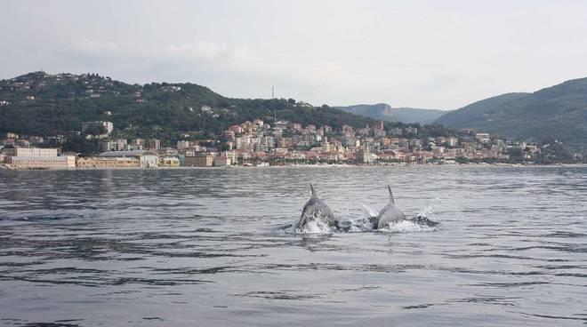 delfini finale