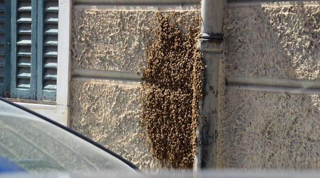 Sciame di api a Savona