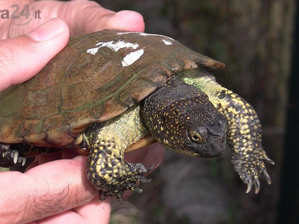 acquario genova, liberazione tartarughe tartaruga