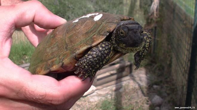 Sedici tartarughe emys dall 39 acquario di genova all for Acquario per tartarughe piccole