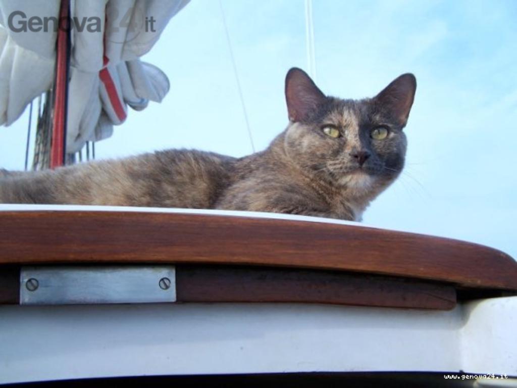 gatto lulu barca