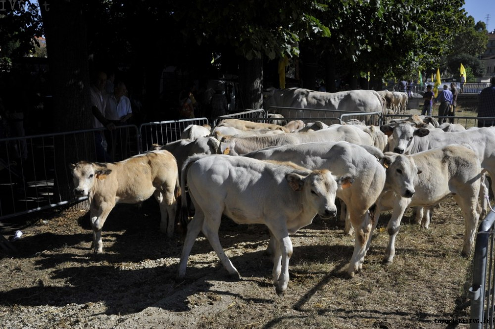Fiera Bestiame Carcare