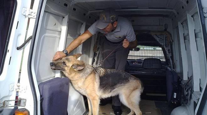 sequestro, cane