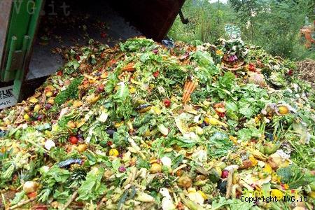 cibo nella spazzatura