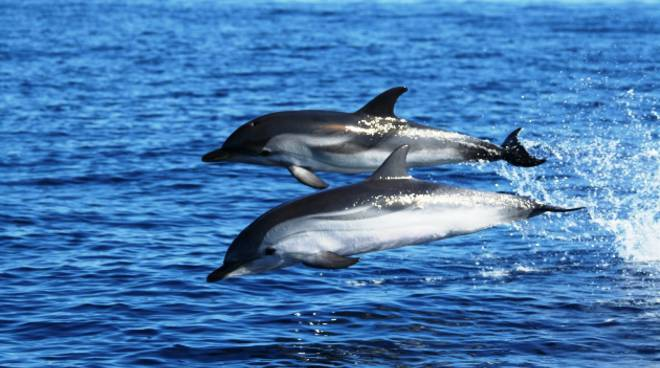 cetacei delfini