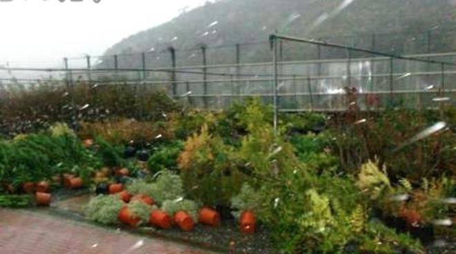 danni coltivazioni meteo