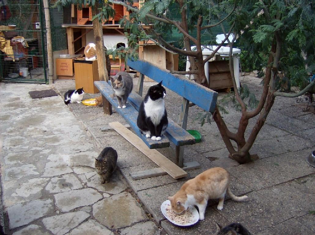 gattile albissola, gatti
