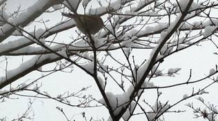 uccellino neve