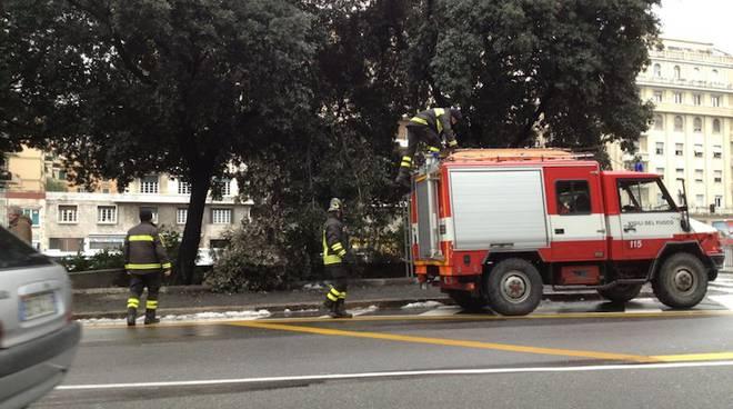 vigili fuoco alberi caduti