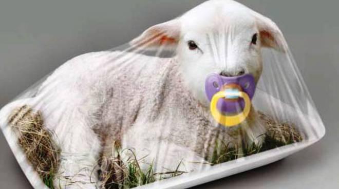 agnello pasqua enpa