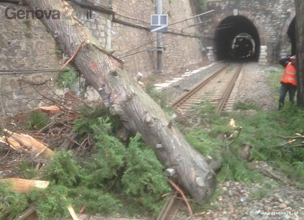 albero caduto su binari, treni