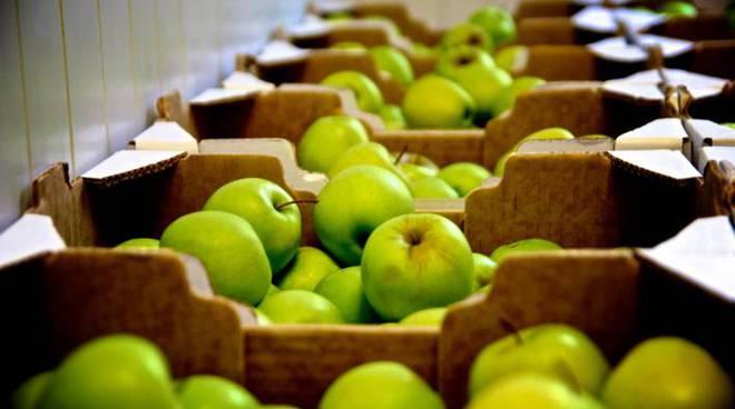 frutta, mele