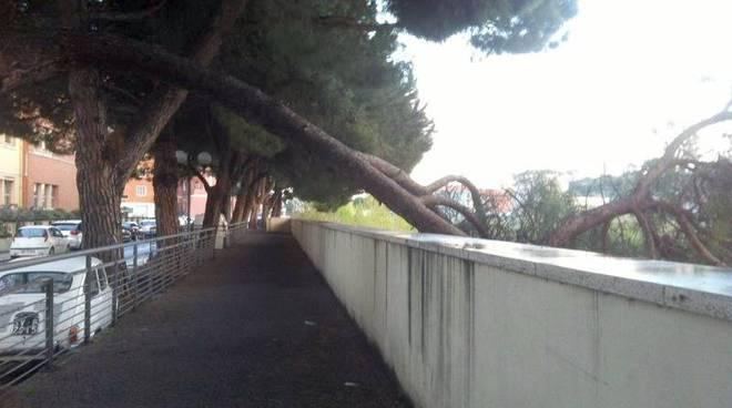 albenga, ramo caduto