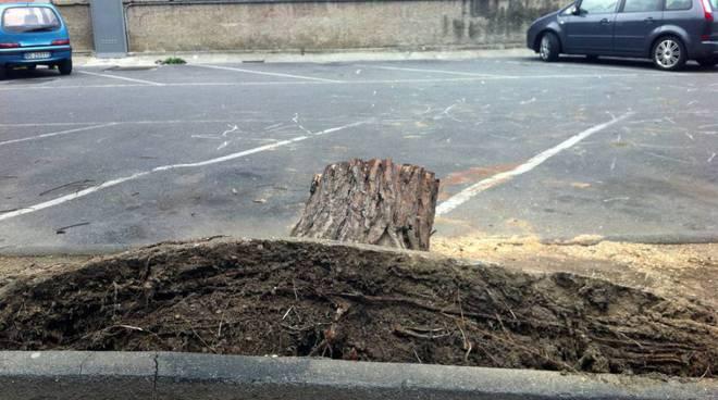 albero caduto in via Patrioti