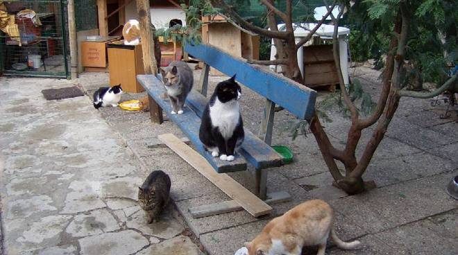 gatti, gattari