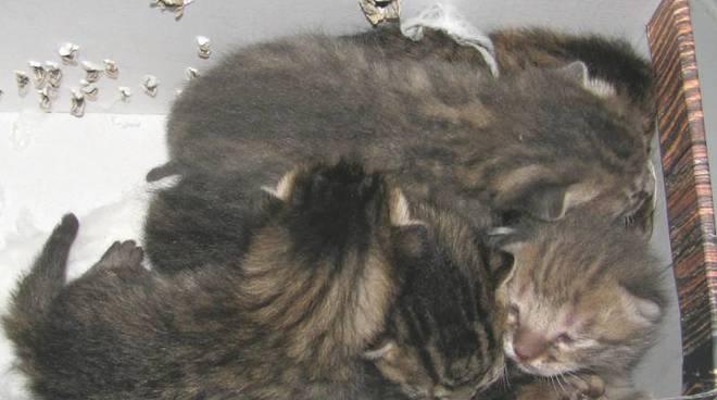 gattini abbandonati bardineto