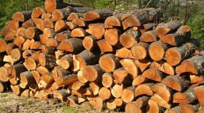 legno legna