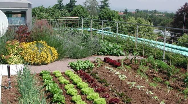 orto, verdura
