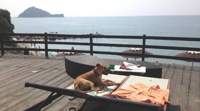 alassio, baba beach spiaggia per cani