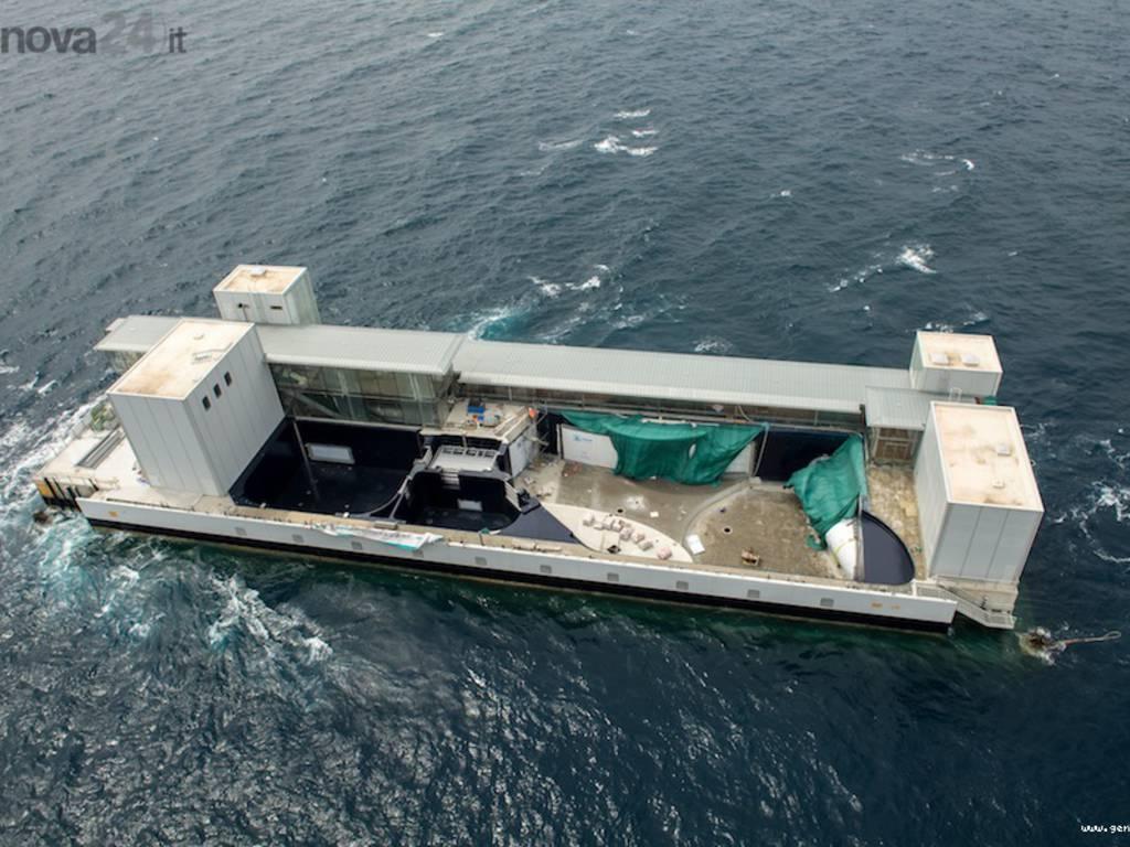 Genova, la vasca dei cetacei