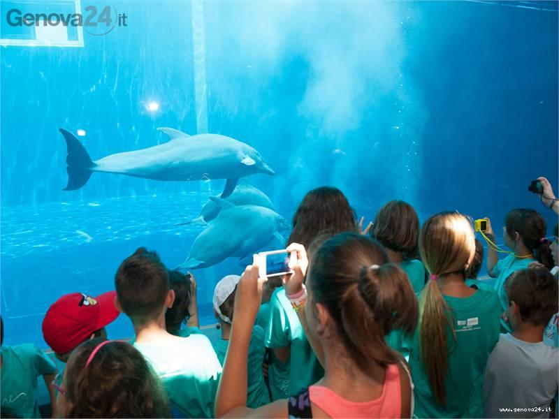 vasca dei cetacei delfini acquario