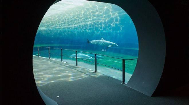 Acquario delfini vasca cetacei