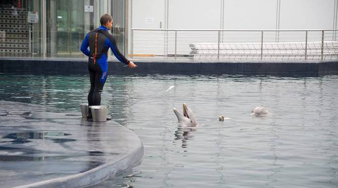 acquario di genova, delfini nella nuova vasca