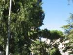 alberi, aree verdi