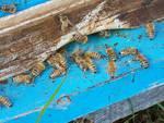 api apiario