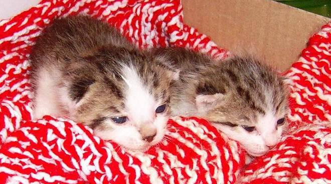 gattini abbandonati marmorassi