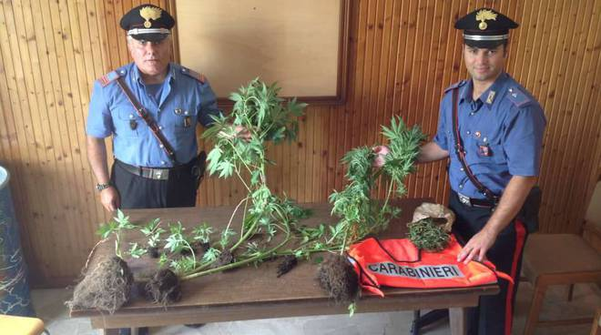 sequestro piante marijuana Mallare
