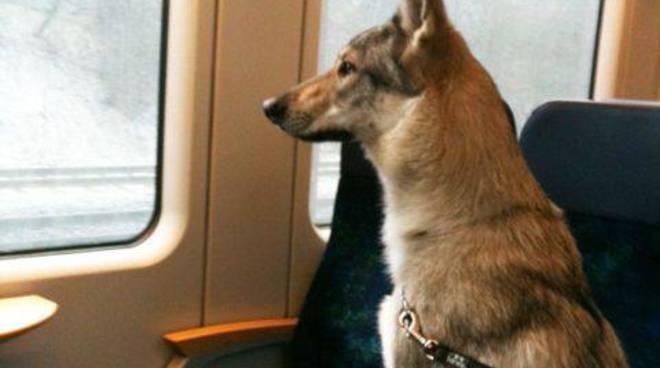 cane in treno